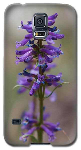 Galaxy S5 Case featuring the photograph Talus Penstemon by Jenessa Rahn