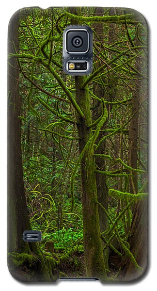 Galaxy S5 Case featuring the photograph Tangled Forest by Jacqui Boonstra
