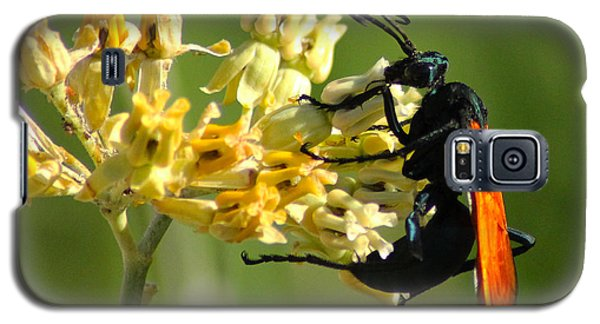 Tarantula Hawk Wasp Galaxy S5 Case by Richard Stephen