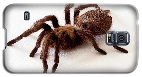 Galaxy S5 Case featuring the photograph Tarantula by Lawrence Burry