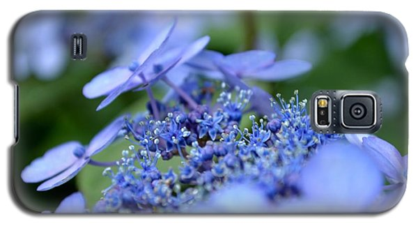 Galaxy S5 Case featuring the photograph Taube Lacecap Hydrangea by Scott Lyons