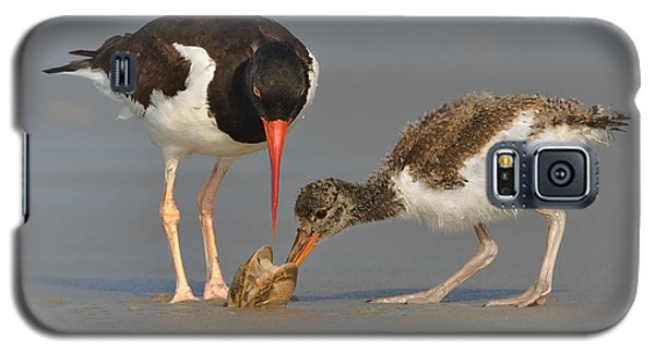 Galaxy S5 Case featuring the photograph Teaching The Young by Jerry Fornarotto