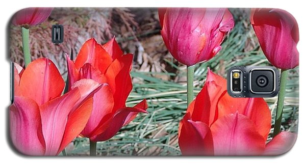 Temple Beauty Tulips Galaxy S5 Case by Rod Ismay