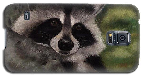 Tennessee Wildlife - Raccoon Galaxy S5 Case by Annamarie Sidella-Felts