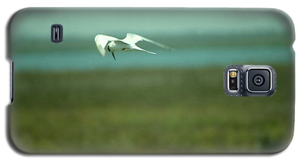 Galaxy S5 Case featuring the photograph Tern In Flight by Bonnie Muir