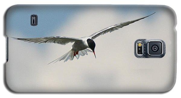 Tern In Flight Galaxy S5 Case
