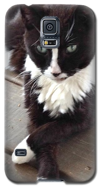 Tess The Temptress Galaxy S5 Case