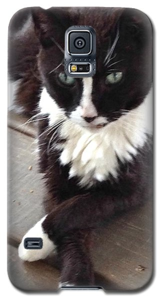 Tess The Temptress Galaxy S5 Case by The Art of Alice Terrill