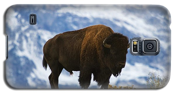 Bison Galaxy S5 Case - Teton Bison by Mark Kiver