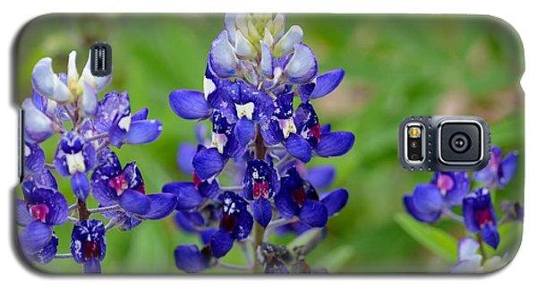 Galaxy S5 Case featuring the photograph Texas Bluebonnets by Debra Martz