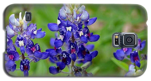 Texas Bluebonnets Galaxy S5 Case