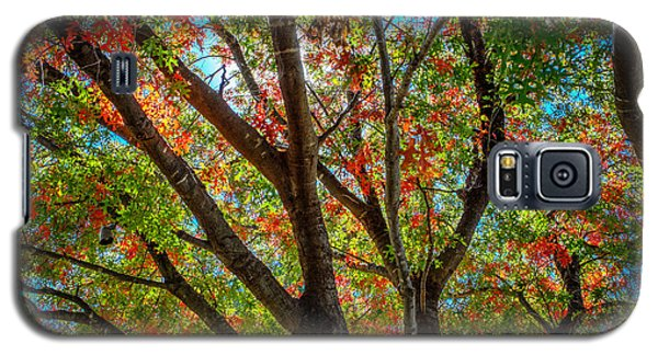 Galaxy S5 Case featuring the photograph Texas Fall Glory by Ross Henton