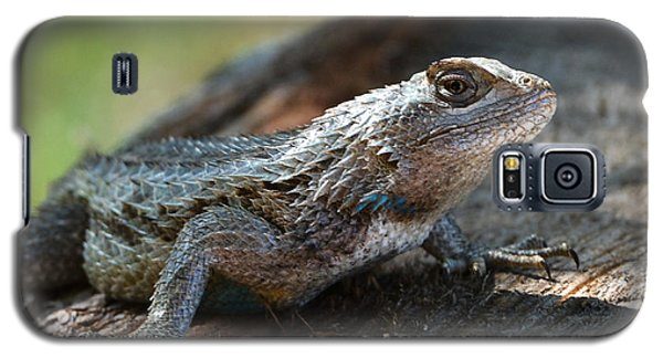 Texas Lizard Galaxy S5 Case