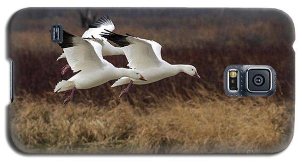 Texas Snow Geese Galaxy S5 Case