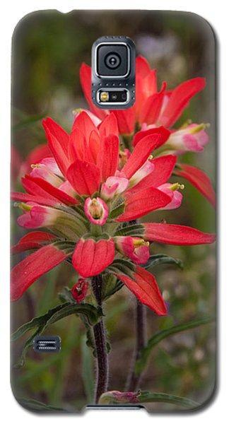 Texas Wildflower Galaxy S5 Case