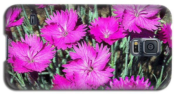 Galaxy S5 Case featuring the photograph Textured Pink Daisies by Gena Weiser