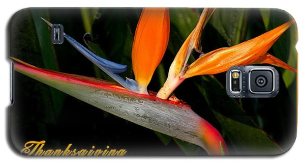 Thanksgiving Card Bird Of Paradise Galaxy S5 Case by Rosalie Scanlon