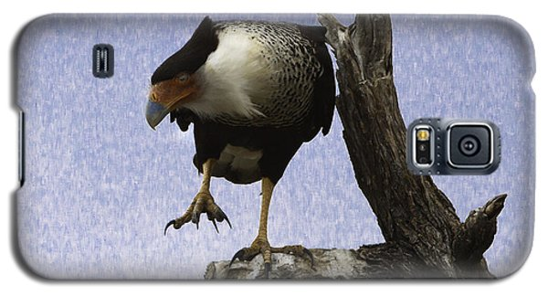 That Caracara Stare Galaxy S5 Case