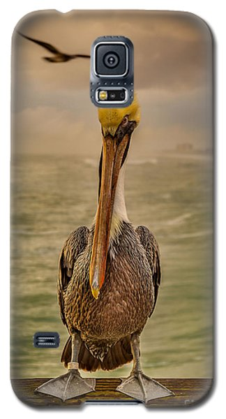 That's Mr. Pelican To You Galaxy S5 Case by Steven Reed