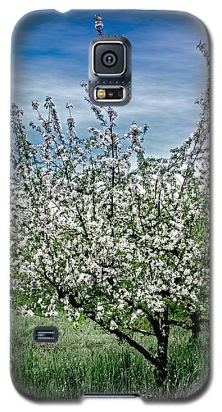 Galaxy S5 Case featuring the photograph The Apple Tree Blooms by William Havle