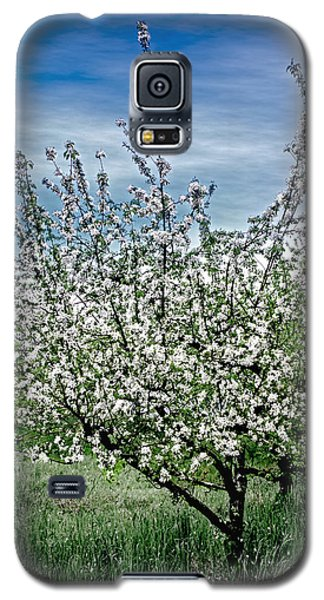 The Apple Tree Blooms Galaxy S5 Case