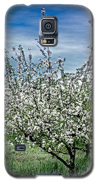 The Apple Tree Blooms Galaxy S5 Case by William Havle