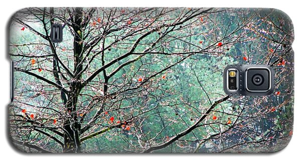 Galaxy S5 Case featuring the photograph The Aura Of Trees by Angela Davies