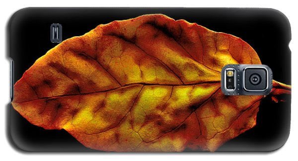 Galaxy S5 Case featuring the photograph The Autumn Leaf by Marwan Khoury