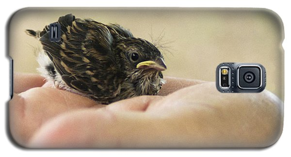 Galaxy S5 Case featuring the photograph The Baby Wren Can't Fly by B Wayne Mullins