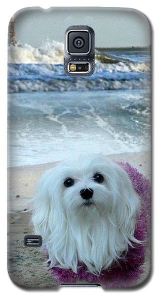 The Beach In Winter Galaxy S5 Case by Morag Bates