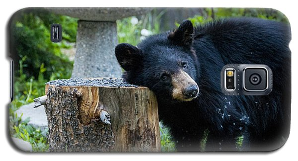 The Bear Cub With An Itch Galaxy S5 Case