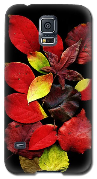 The Beautiful Colors Of Nature Galaxy S5 Case