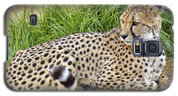 The Beautiful Cheetah Galaxy S5 Case
