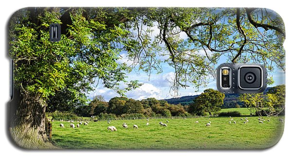 The Beautiful Cheshire Countryside - Large Oak Tree Frames A Field Of Lambs Galaxy S5 Case