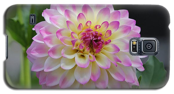 The Beautiful Dahlia Galaxy S5 Case