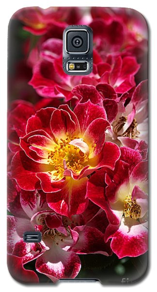 The Beauty Of Carpet Roses  Galaxy S5 Case
