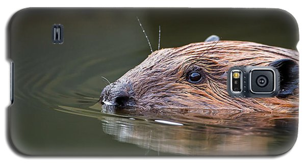 The Beaver Galaxy S5 Case by Bill Wakeley