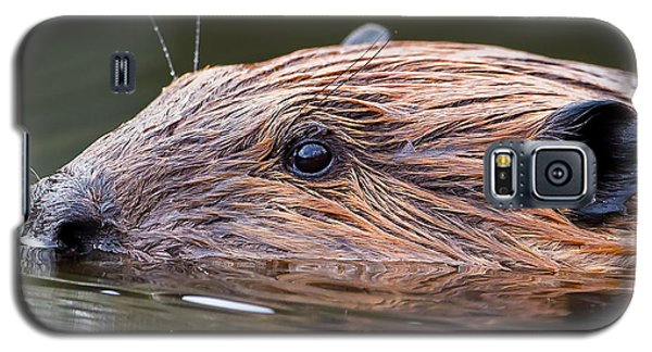 The Beaver Square Galaxy S5 Case by Bill Wakeley