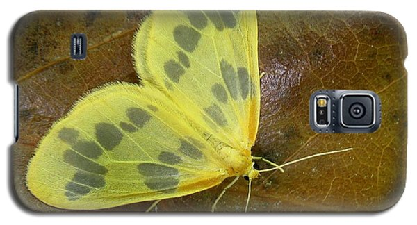 Galaxy S5 Case featuring the photograph The Beggar Moth by William Tanneberger
