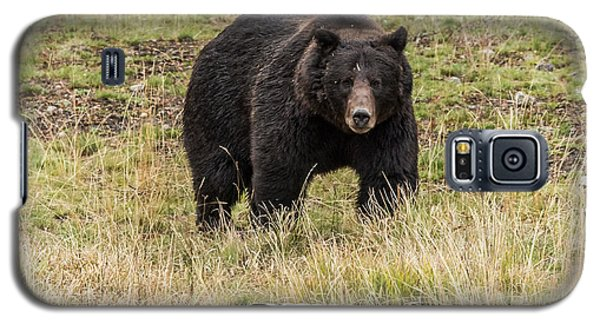 Galaxy S5 Case featuring the photograph The Big Black Grizzly Boar by Yeates Photography