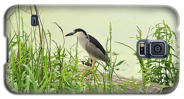 The Black-crowned Night Heron Galaxy S5 Case