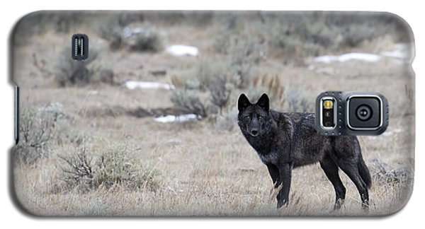 The Black Wolf Galaxy S5 Case