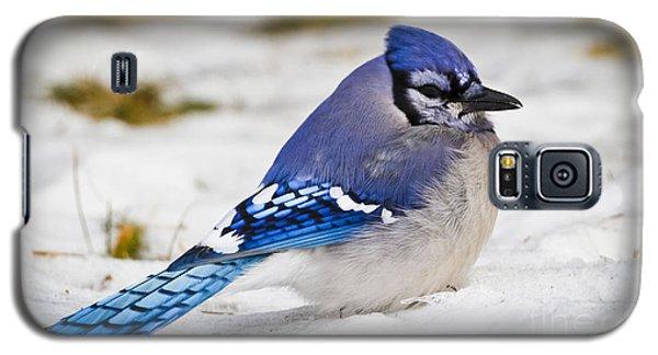 The Bluejay Galaxy S5 Case by Ricky L Jones