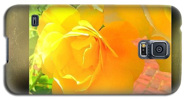 Galaxy S5 Case featuring the photograph The Blushing Yellow Rose by Becky Lupe