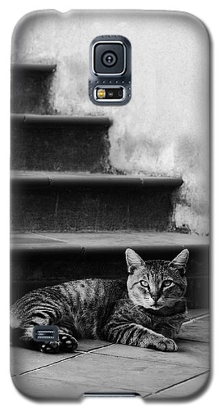 Galaxy S5 Case featuring the photograph The Boss by Laura Melis