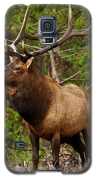 Galaxy S5 Case featuring the photograph The Bull Elk by Steven Reed