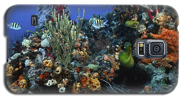 The Busy Reef Galaxy S5 Case
