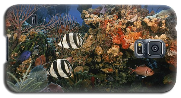 The Butterflyfish On Reef Galaxy S5 Case