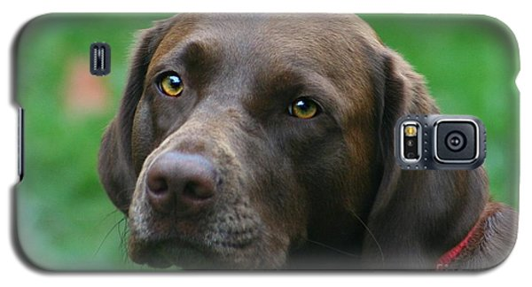 The Chocolate Lab Galaxy S5 Case by Barbara S Nickerson