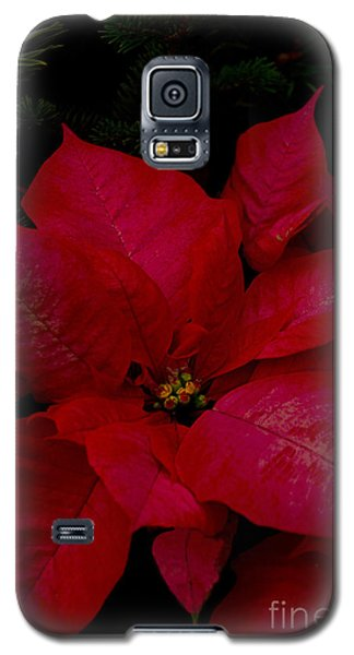 The Classic Christmas Pointsettia Galaxy S5 Case by Bill Woodstock